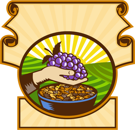 raisin: Illustration of a hand holding grapes with raisins in a bowl set inside an oval shape set inside a crest with sunburst in the background done in retro woodcut style.