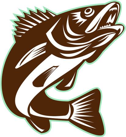 Illustrazione di una Walleye (Sander vitreus, ex Stizostedion vitreum), un pesce d'acqua dolce perciform saltando su sfondo isolato fatto in stile retrò. Archivio Fotografico - 55296151