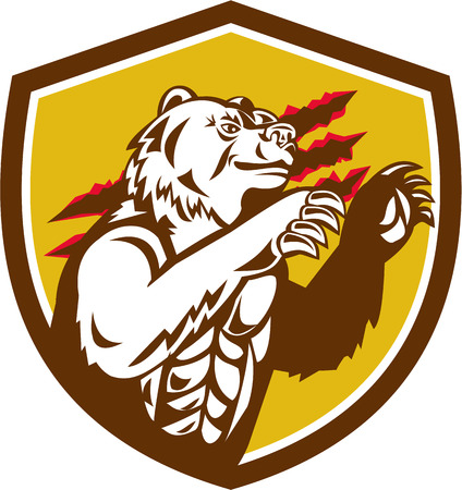 smirking: Illustration of a smirking California grizzly North American brown bear his paw raised viewed from the side with claw marks in the background done in retro style set inside crest shield.