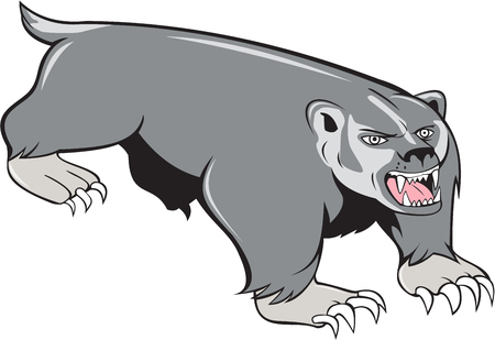 pounce: Illustration of a badger pouncing viewed from front set on isolated white background done in cartoon style.