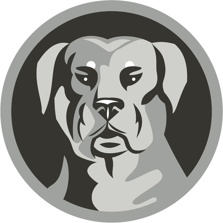 guard dog: Black and white illustration of a Rottweiler Metzgerhund mastiff-dog guard dog head viewed from the front set inside circle done in retro style.