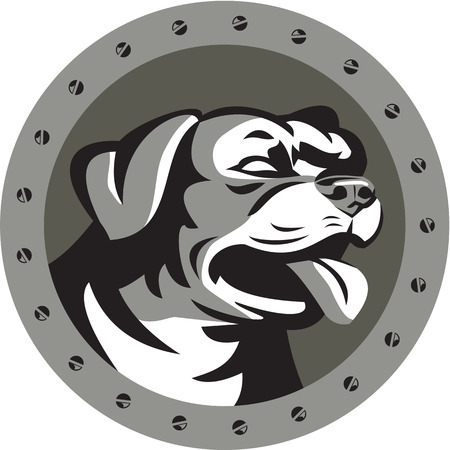 iron and steel: Metallic style illustration of a Rottweiler Metzgerhund mastiff-dog guard dog head looking to the side set inside circle with screws done in retro style. Illustration