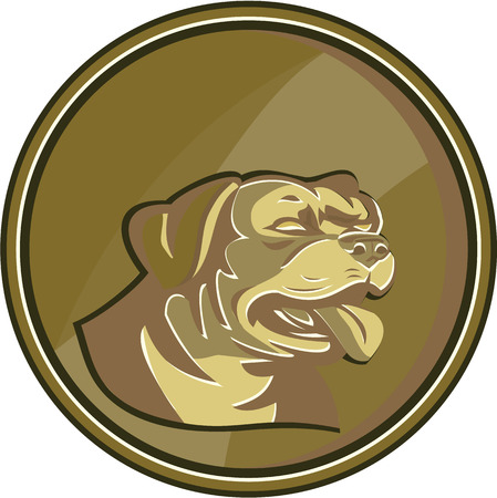 guard dog: Illustration of a Rottweiler Metzgerhund mastiff-dog guard dog head viewed from the side set inside circle gold medallion done in retro style. Illustration