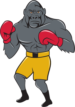 stance: Illustration of a gorilla boxer in boxing stance viewed from front set on isolated white background done in cartoon style.
