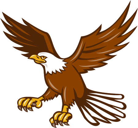 swooping: Illustration of an american bald eagle flying swooping viewed from the side set on isolated white background done in retro style.