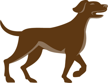 pointer dog: Illustration of an english pointer dog pointing up in a pointer stance with head up tail out and one foot slightly raised set on isolated white background viewed from the side done in retro style.