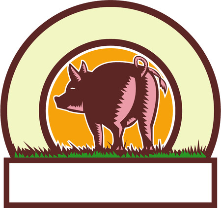 pigtail: Illustration of a pig standing showing pigtail viewed from rear set inside circle done in retro woodcut style.
