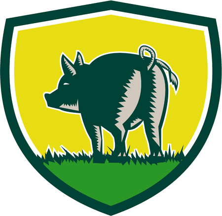 pigtail: Illustration of a pig standing showing pigtail viewed from rear set inside shield crest done in retro woodcut style.