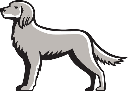 gun dog: Illustration of an english setter dog standing viewed from the side set on isolated white background done in retro style.