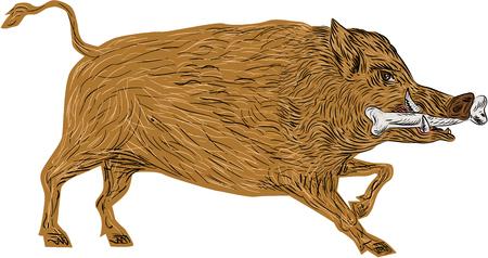 jabali: Ilustración de un salvaje razorback jabalí cerdo caminando con el hueso en la boca se ve desde el lado conjunto sobre fondo blanco aislado hecho en estilo retro.