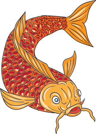 Drawing sketch style illustration of a trout fish swimming diving down viewed from the front set on isolated white background.