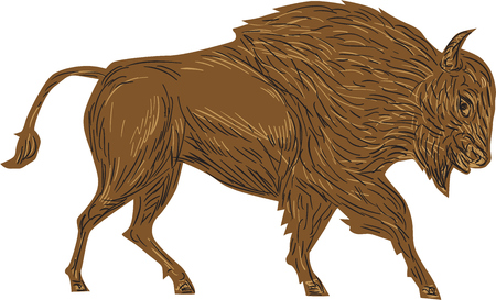 plains: Illustration of a North American bison, plain bison, wood bison or buffalo, bull charging viewed from side on isolated white background done in retro style.