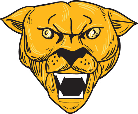 fang: Drawing sketch style illustration of an angry cougar mountain lion head showing fangs viewed from front set on isolated white background.