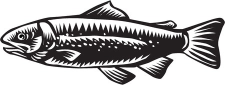 sea side: Illustration of a spotted sea trout fish viewed from the side set on isolated white background done in retro woodcut style.