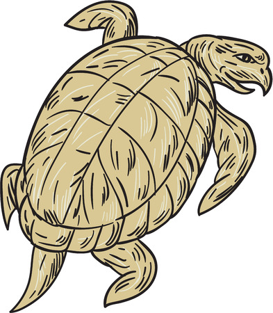 backview: Drawing sketch style illustration of a ridley turtle viewed from rear set on isolated white background.