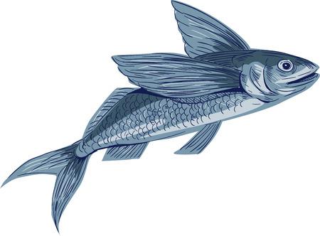 Dessin croquis illustration de style d'un poisson volant ou Exocoetidae, une famille de poissons marins dans l'ordre classe Beloniformes Actinoptérygiens vu de l'ensemble de côté sur fond blanc isolé