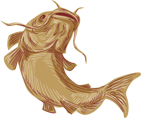 going up: Drawing sketch styleillustration of a ray-finned fish catfish also known as mud cat, polliwogs or chucklehead going up viewed from front set on isolated white background. Illustration