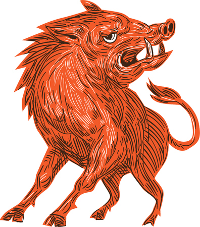 jabali: Drawing sketch style illustration of an angry wild pig boar razorback ready to attack looking to the side viewed from front set on isolated white background.