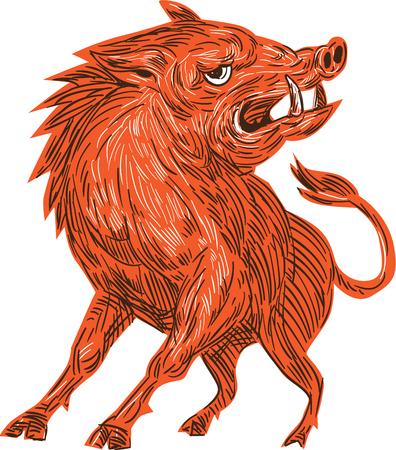 jabali: Gráfico de la ilustración del estilo del bosquejo de un cerdo salvaje razorback jabalí enojado listo para atacar mira a la cara frontal se ve desde conjunto sobre fondo blanco aislado.