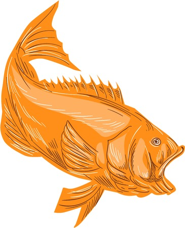 Drawing sketch style illustration of a largemouth bass fish diving viewed from the side set on isolated white background. Illustration