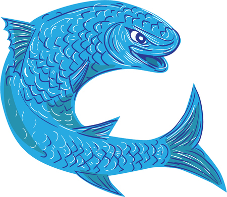 Zeichnung Skizze Stil Abbildung eines Meeräsche oder Äsche aus einer Familie Mugilidae in der Größenordnung von Strahlenflosser Fisch, Springen von der Seite festgelegt auf weißem Hintergrund isoliert betrachtet. Standard-Bild - 61971642