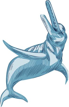 아마존 강 돌고래의 또는 격리 된 흰색 배경에 세트를 찾고 담수 나 염수에 독점적으로 상주 완전히 수생 포유 동물의 널리 분산 된 그룹 BOTO 스케치 스타일 그림을 그리기.