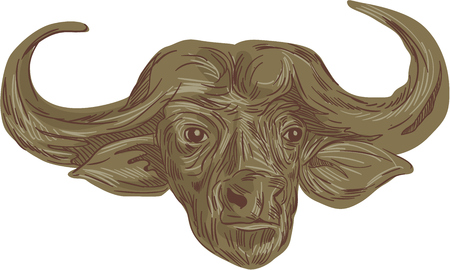 Drawing sketch style illustration of a head of an African buffalo or Cape buffalo,Syncerus caffer, a large African bovine viewed from front set on isolated white background. Illustration