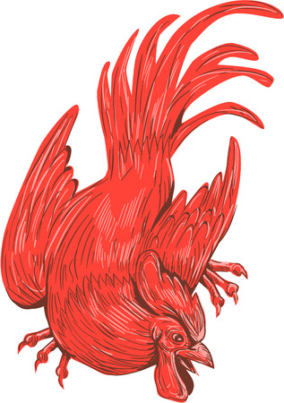 crouch: Drawing sketch style illustration of a chicken rooster crouching viewed from front set on isolated white background.