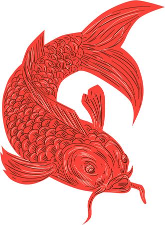 Gráfico de la ilustración del estilo del bosquejo de un nishikigoi koi pescados de la trucha de color rojo situado en el fondo blanco aislado.