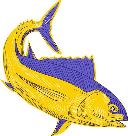 Dessin esquisse illustration de style de germon thon également connu sous le poisson germon, albicore, albie, pigfish, tombo ahi, binnaga, germon, bonito del Norte, bonito allemand, longfin, thon longfin et tunny longfin vu du côté situé sur isol Banque d'images - 61971762