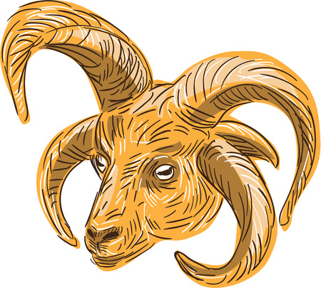 Drawing sketch style illustration of a head of a Manx Loaghtan, Loaghtyn or Loghtan, a breed of sheep (Ovis aries) native to the Isle of Man that have dark brown wool and usually four or occasionally six horns set on isolated white background. Illustration