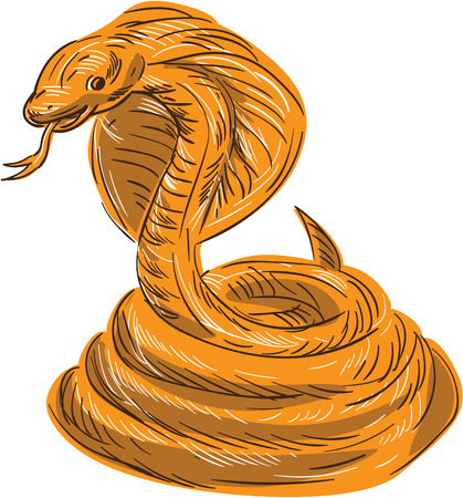 coiled: Drawing sketch style illustration of a cobra viper snake serpent coiled set on isolated white background. Illustration