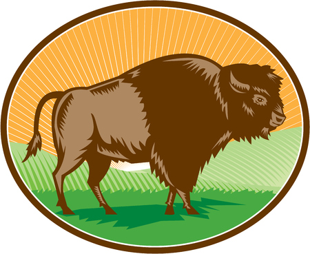 printmaking: Illustration of an american bison buffalo bull viewed from the side set inside oval shape with sunburst and grass field in the background done in retro woodcut style. Illustration