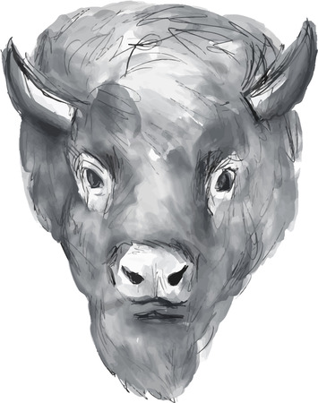 american bison: Watercolor style illustration of an american bison buffalo bull head facing front set on isolated white background.