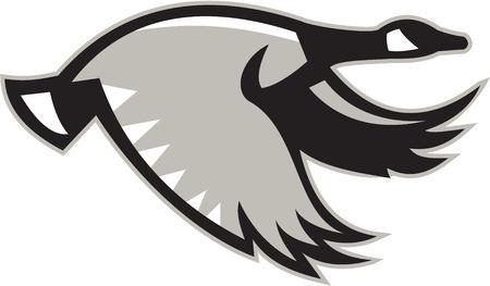 Illustratie van een Canadese gans vliegen vanuit de set op witte achtergrond gedaan in retro-stijl kant.