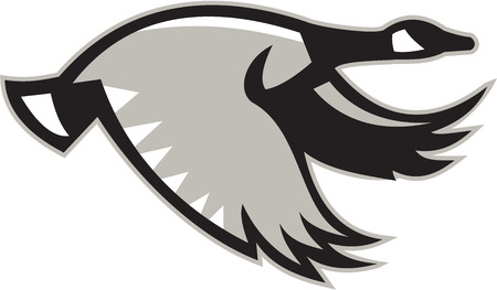 Ilustración de un ganso de Canadá que vuelan ve desde el lado situado en el fondo blanco aislado hecho en estilo retro.