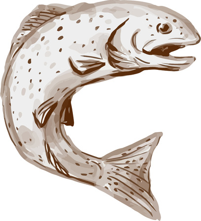 Watercolor style illustration of a rainbow trout fish jumping viewed from the side set on isolated white background.