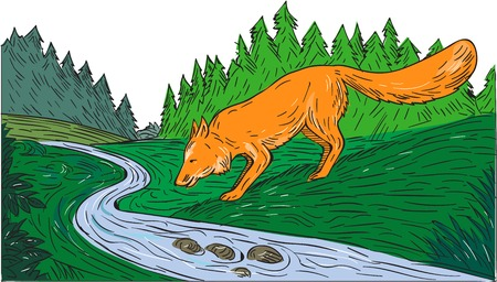 creek: Drawing sketch style illustration of a fox drinking from river creek with woods trees forest in the background.