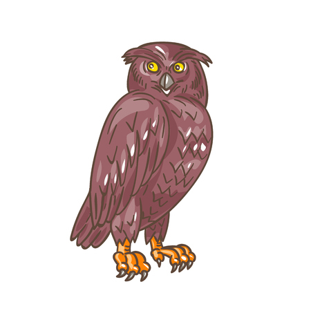 observing: Drawing sketch style illustration of an owl standing observing looking to the side viewed from front set on isolated white background.