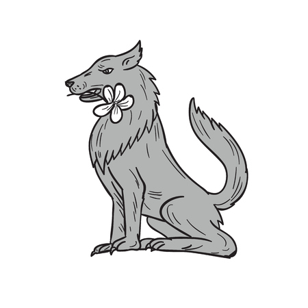 Drawing sketch style illustration of a timber wolf sitting biting holding a plumeria flower in mouth viewed from the side set on isolated white background.
