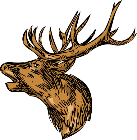 Drawing sketch style illustration of a red deer stag buck head roaring facing side set on isolated white background. Illustration