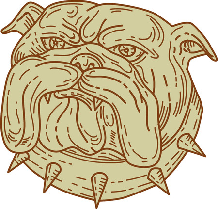Mono line style illustration of a bulldog dog mongrel head mascot with collar viewed from front set on isolated white background. Illustration