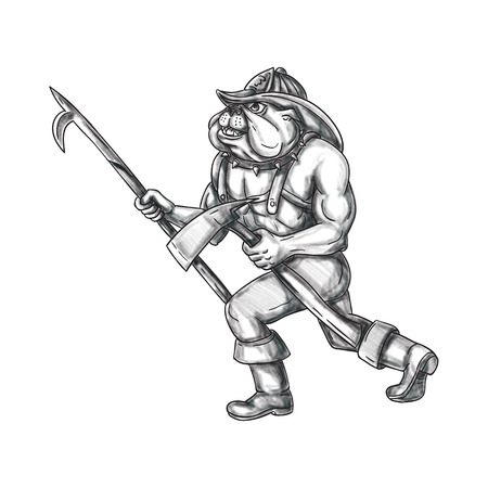 Tattoo style illustration of a bulldog firefighter holding pike pole and fire axe walking viewed from the side set on isolated white background.