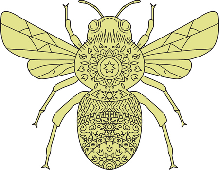 genus: Mandala style illustration of a bumblebee or bumble bee, a member of the genus Bombus, part of Apidae, one of the bee families set on isolated white background. Illustration
