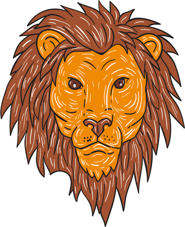 big head: Drawing sketch style illustration of a male lion big cat head with flowing mane viewed from front set on isolated white background. Illustration