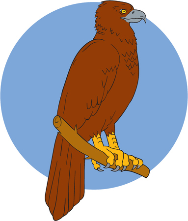 Drawing sketch style illustration of an Australian wedge-tailed eagle or bunjil Aquila audax, sometimes known as the eaglehawk, the largest bird of prey in Australia perced on a branch viewed from the side set inside circle. Illustration