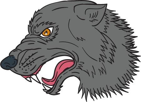 Drawing sketch style illustration of grey wolf head growling viewed from the side set on isolated white background.  Illustration