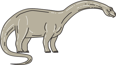 Illustration of a Brontosaurus meaning thunder lizard, a genus of gigantic quadruped sauropod dinosaurs that lived in the late Jurrasic epoch looking down viewed from the side set on isolated white background.