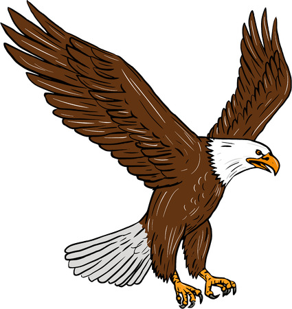Drawing sketch style illustration of bald eagle flying wings flapping viewed from the side set on isolated white background. Illustration