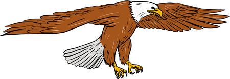 Tekening schetsstijl illustratie van kale adelaar swooping vleugels flap gezien vanuit de kant ingesteld op geïsoleerde witte achtergrond. Stock Illustratie